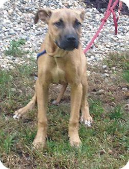 Shepherd (Unknown Type) Mix Dog for adoption in Bloomfield, Connecticut - Zen Shorts