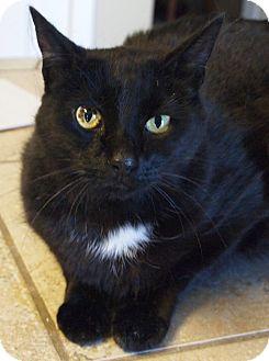 Domestic Shorthair Cat for adoption in Buhl, Idaho - Maude