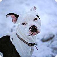 Adopt A Pet :: Eve - Wasilla, AK