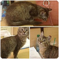Adopt A Pet :: Nichelle - Modesto, CA