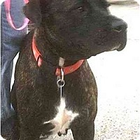 Adopt A Pet :: Levee - Forest Hills, NY