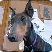 Adopt A Pet :: Noelle--adopted! - New Richmond, OH