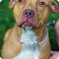Adopt A Pet :: Mama - Tinton Falls, NJ