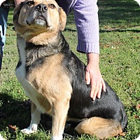 Adopt A Pet :: Roxie*ADOPTED!* - Chicago, IL
