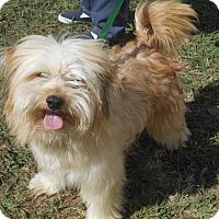 Adopt A Pet :: Finn - Lockhart, TX