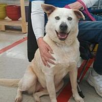 Adopt A Pet :: Karma - Laconia, IN