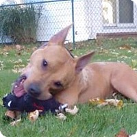Adopt A Pet :: Katie - Toledo, OH