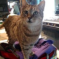 Adopt A Pet :: Starlight - Benton, PA