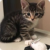 Adopt A Pet :: Leela - Reston, VA