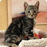 Adopt A Pet :: Reggie - Richmond Hill, ON