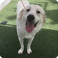 Adopt A Pet :: Tundra - Houston, TX