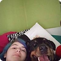 Adopt A Pet :: Ajay - Lorain, OH