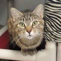Adopt A Pet :: Wilson - Eagle River, WI
