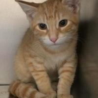 Adopt A Pet :: Windsor - Baraboo, WI