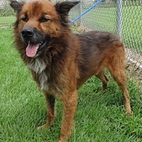 Adopt A Pet :: Shaggy - Olive Branch, MS