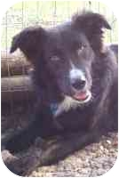 Border Collie Mix Dog for adoption in Carrollton, Texas - Zip