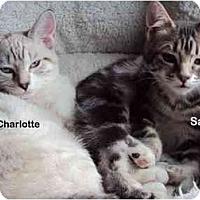 Adopt A Pet :: Sara - Portland, OR