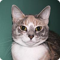 Adopt A Pet :: Margareet - Rockaway, NJ