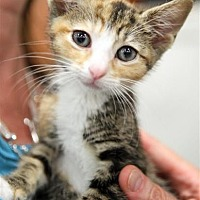 Adopt A Pet :: Fruitloop - Fairfax Station, VA