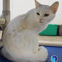 Adopt A Pet :: Snowflake - Lucedale, MS