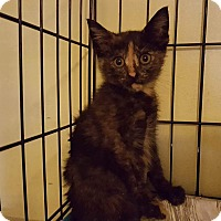 Adopt A Pet :: Celeste - Old Bridge, NJ