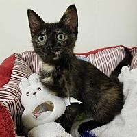 Adopt A Pet :: Mocha - Montgomery City, MO