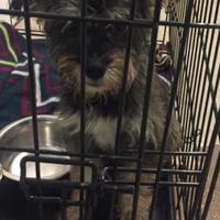 Adopt A Pet :: Dotty - Richmond, IN