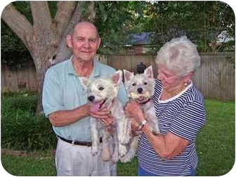 Westie, West Highland White Terrier Puppy for adoption in Frisco, Texas - Tina & Ike Adopted