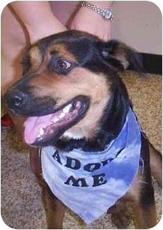 Rottweiler Mix Dog for adoption in Scottsdale, Arizona - Shilah