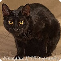 Adopt A Pet :: Ebony - Crescent, OK