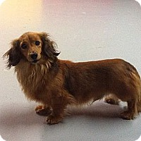 Adopt A Pet :: Hanz - Painesville, OH