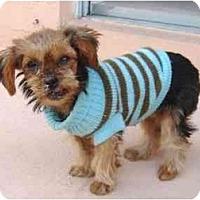 Adopt A Pet :: Sandee - West Palm Beach, FL
