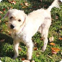 Adopt A Pet :: emory - houston, TX