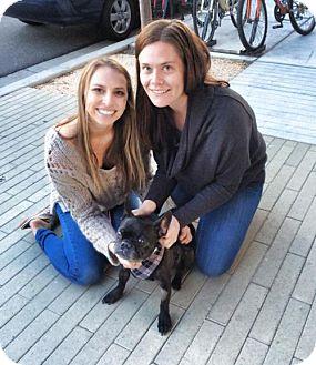 French Bulldog Dog for adoption in Sacramento, California - Bellamy