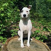 Adopt A Pet :: Daphne - Asheboro, NC