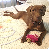 Adopt A Pet :: Jen - South Dennis, MA