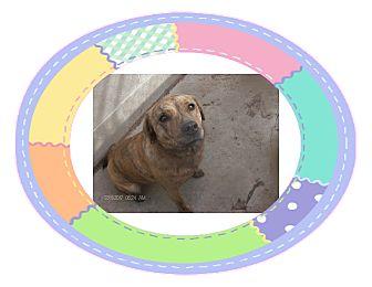 Corgi Mix Dog for adoption in KELLYVILLE, Oklahoma - NOELLE