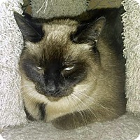 Adopt A Pet :: Kitty - Palo Cedro, CA