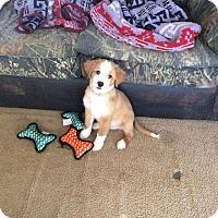 Adopt A Pet :: Bernadette - adoption pending - East Hartford, CT