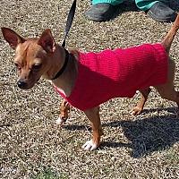 Adopt A Pet :: Anubis - Carthage, NC