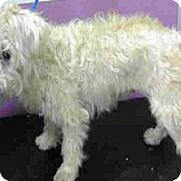 Adopt A Pet :: Eden - Boulder, CO