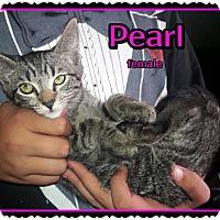 Adopt A Pet :: Pearl - Richmond, CA