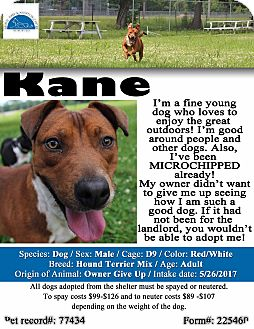 Hound (Unknown Type)/Terrier (Unknown Type, Medium) Mix Dog for adoption in Texarkana, Arkansas - Kane