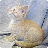 Adopt A Pet :: SASSY - Anna, IL