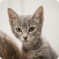 Adopt A Pet :: Shelly - Dallas, TX