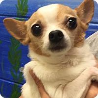 Adopt A Pet :: Isabella - Orlando, FL