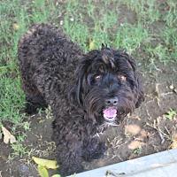 Adopt A Pet :: Ace - Henderson, NV