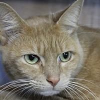 Adopt A Pet :: Score - Sarasota, FL