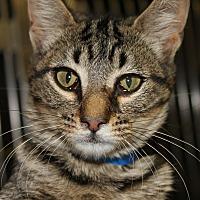 Adopt A Pet :: KANTI & KACHINA - Clayton, NJ