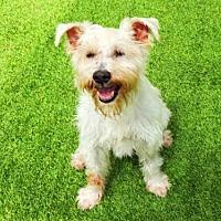 Adopt A Pet :: HARVEY - Raleigh, NC